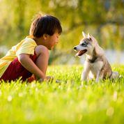 Chien et chat : les allergies saisonnières