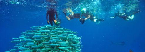 Immersion en riviera maya
