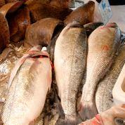Manger du poisson, facteur de longévité