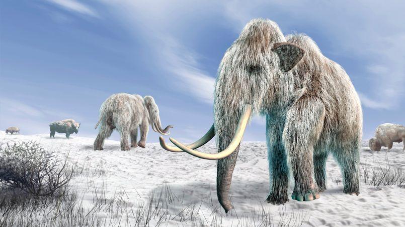Illustration sur ordinateur de mammouths laineux, que des biologistes russes rêvent de voir de nouveau dans les steppes de Sibérie.