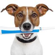 Chien et chat: attention à l'hygiène dentaire