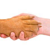 Le contrat d'assurance santé de votre animal