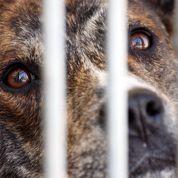 La cellule anti-trafic de la SPA dénonce une hausse des maltraitances d'animaux