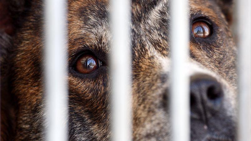 La SPA alerte, entre autres, sur le sort des chiens invendus, traités comme de la marchandise périmée.