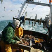 Climat: les poissons mettent le cap au nord