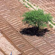 Menace sur la biodiversité des sols