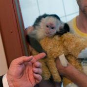 Justin Bieber perd la garde de son singe