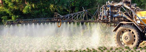 L'épandage des pesticides peut propager des virus
