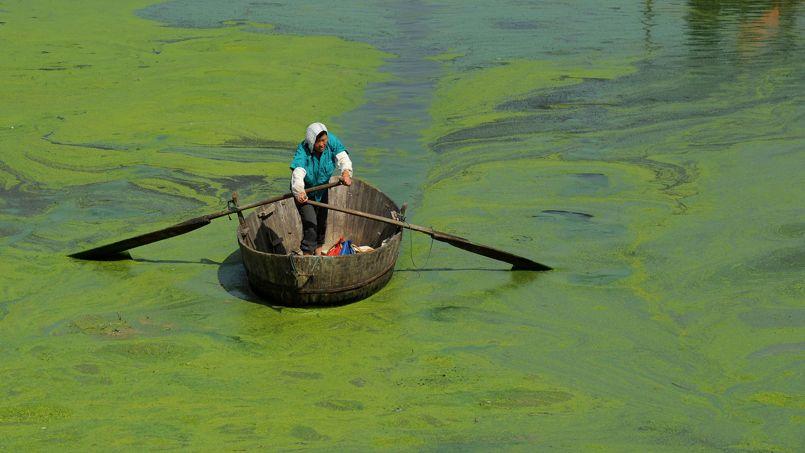 Marée verte. Un pêcheur Chinois pagaye sur les eaux verdies du lac Chaohu, dans la province de Hefei. Avec l'élévation des températures et les rejets d'engrais, les algues qui tapissent sa surface ont prospéré.