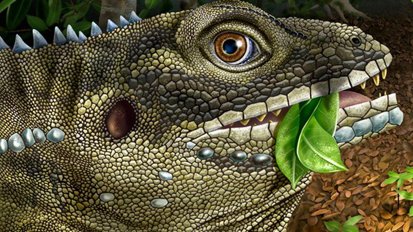 Le specimen, découvert par des paléontologues du Nebraska, a été baptisé du nom du chanteur des Doors.