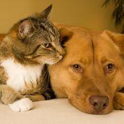 Chien et chat : la prévention avant tout