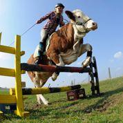 «Un bœuf ou un cheval, c'est la même chose»