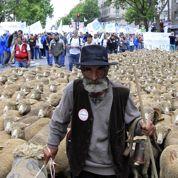 Les éleveurs à Paris pour défendre la filière