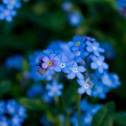 Au jardin ce week-end: pensez au printemps