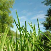 Au jardin : la pelouse en mode été