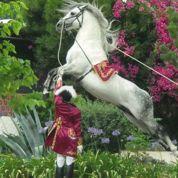 Quand les chevaux sont des bêtes de scène…
