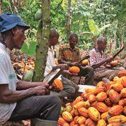 Le cacao durable ale vent en poupe