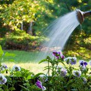 Au jardin ce week-end: attention au départ
