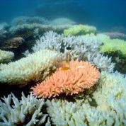 Des bombes larguées sur la Barrière de corail