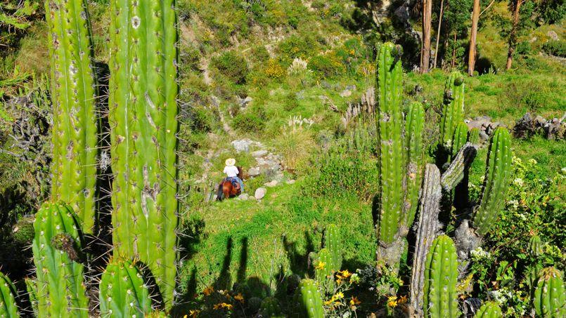 Une balade équestre est un moyen idéal pour contempler les paysages surprenants de la vallée du Colca.