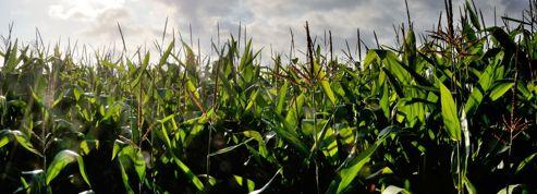 La culture des OGM gagne du terrain dans le monde