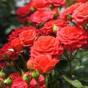 Au jardin ce week-end: des fleurs à profusion