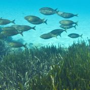 Climat: les poissons filent aux pôles
