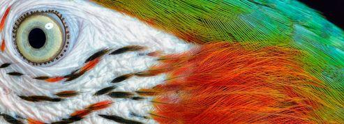 Zoologie, la couleur dans la peau