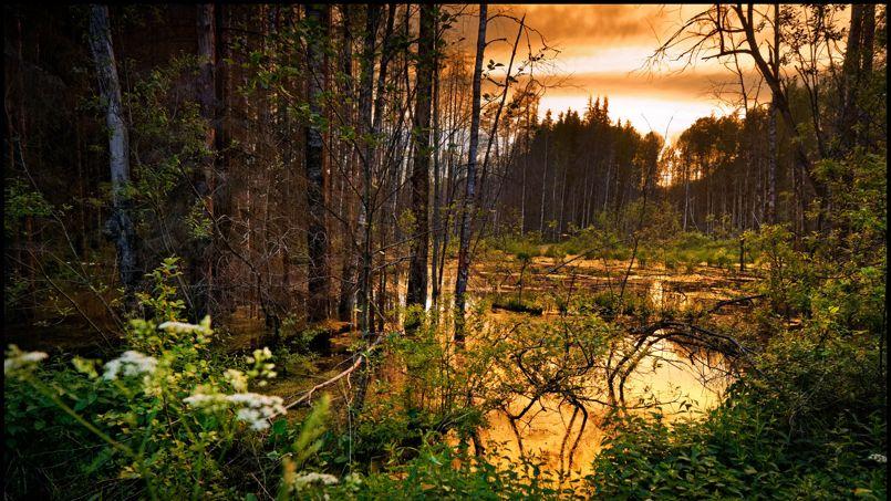 Avant de rejoindre les lacs de Valdaï, la Volga n'est qu'un ruisseau au milieu d'une forêt sombre et impénétrable.