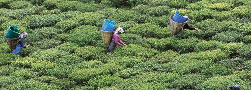 En Inde, l'État du Sikkim a fait le pari de l'agriculture bio