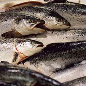 Flambée des prix pour le saumon