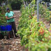 Les chômeurs espagnols visent les vendanges
