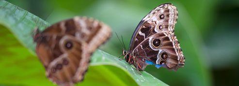 Les insectes entendent le battement d'ailes des oiseaux