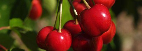 Les producteurs démunis face aux vols de fruits et légumes