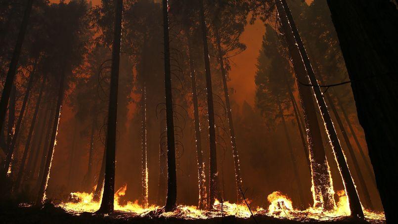 Californie, le 21 août: un incendie s'est déclaré. Le feu, qui brûle hors de tout contrôle, menace 2500 foyers à l'extérieur du parc national de Yosemite.