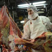 Soupçons d'un nouveau trafic de viande de cheval