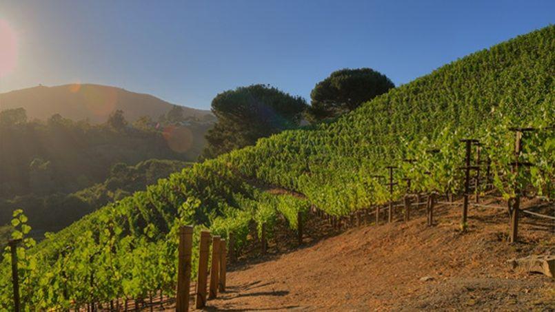 Murdoch s'offre le must du vin californien