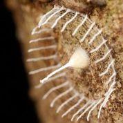 Un mystérieux cocon découvert au Pérou
