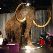 Le mammouth américain en Sibérie...