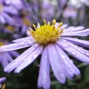 Au jardin ce week-end: soignez votre pelouse