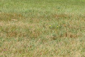 Si votre gazon a souffert de la chaleur, c'est le moment idéal pour ressemer les zones dégarnies.