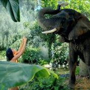 Katy Perry fait enrager la SPA américaine