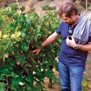 L'Inra teste les vignobles du futur