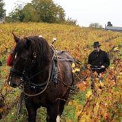 Un viticulteur bio en procès pour un AOC