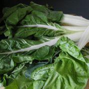 Au jardin : des légumes frais tout l'hiver