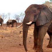 L'éléphant reconnaît ce qui est pointé du doigt
