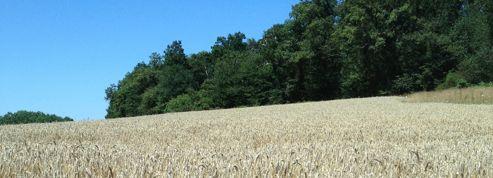 Des agriculteurs touchent des aides de la PAC en avance