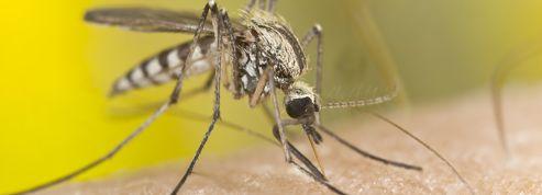 Assurance santé : se protéger du paludisme