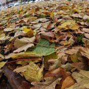 Ne jetez pas vos feuilles mortes !