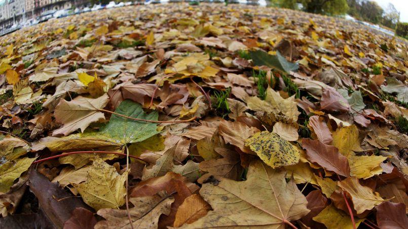 Au jardin ce week end ne jetez pas vos feuilles mortes for Sac pour feuilles mortes